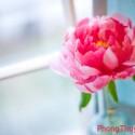 Giải pháp thu hút vận may bằng hoa