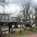 Cây khô trước nhà tạo nên trường khí xấu